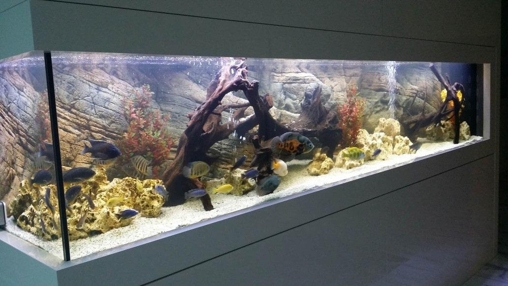 acquario-viganello-roggia-progetto-liberty-lugano